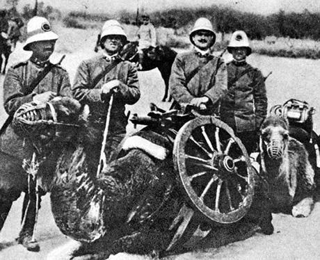 artiglieria cammellata italiana libia 1912