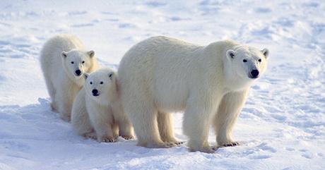 cronache orso