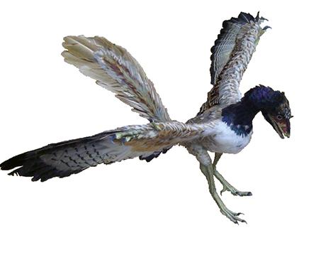Archaeopteryx_2B