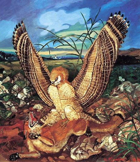 Img. 2 Aquila e volpe
