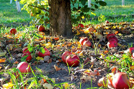 FruitTree_ground