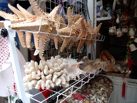 vendita di coralli e stelle marine